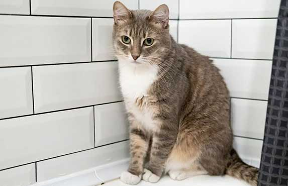 cat in bathroom