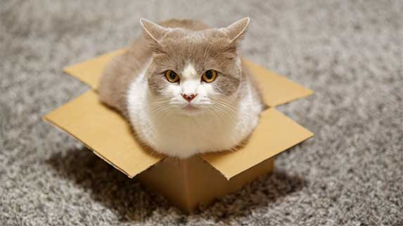 cat on a small box