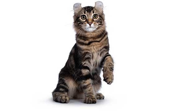 cat curled paw