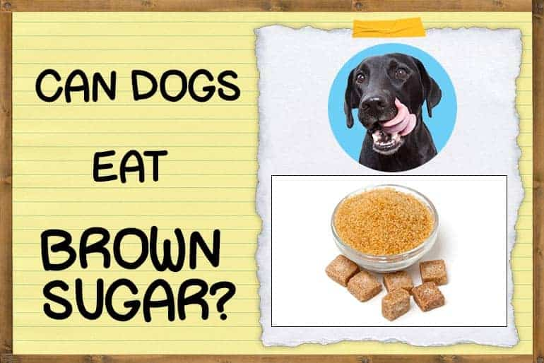 Can Dogs Eat Brown Sugar