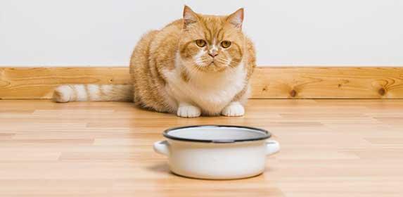 cat dislike food
