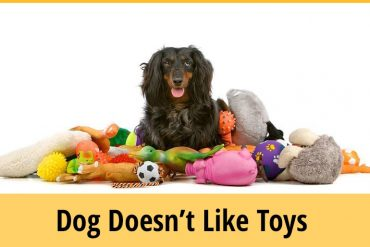 My Dog Doesn't Like Toys-How Can I Entertain Him?