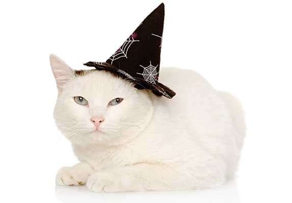 Cat wearing witch hat