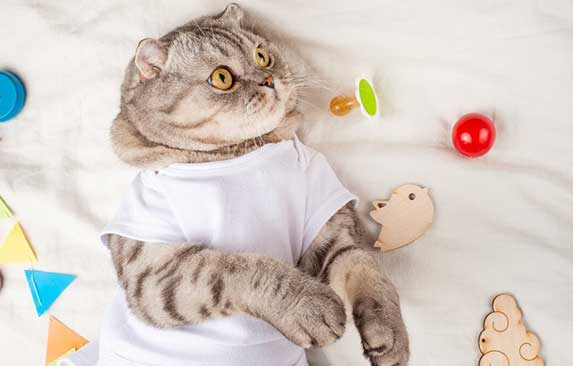 kitten looking at pacifier