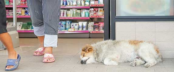 dog ignored by people