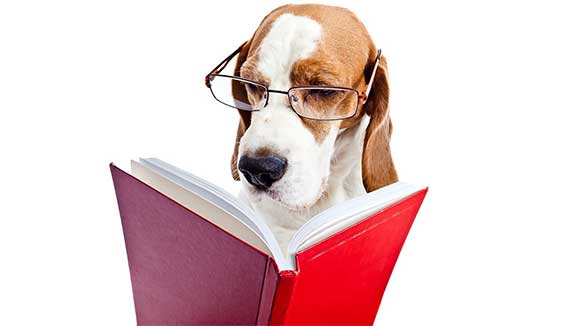 Dog with reading glasses