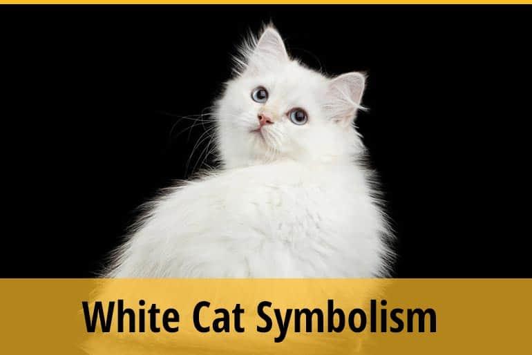 White Cat Symbolism