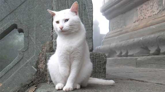 cat in monastery