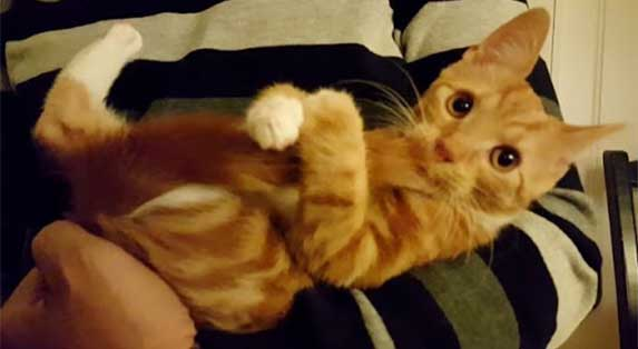 kitten sucking its thumb