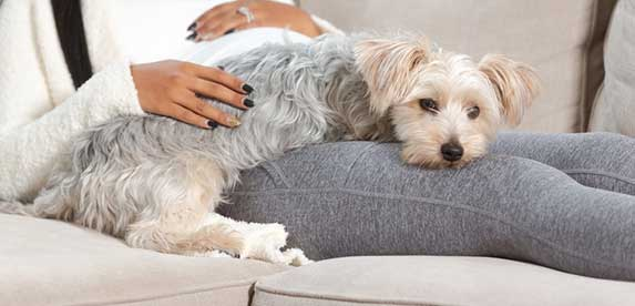 Dog laying on owner's legs