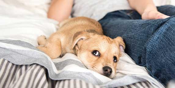 anxious puppy