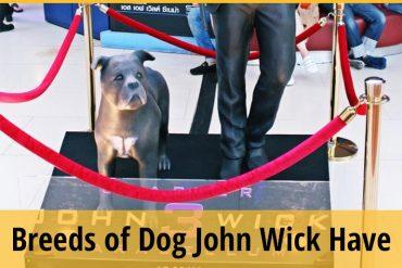 John Wick Dog-Breeds of Dog John Wick Have