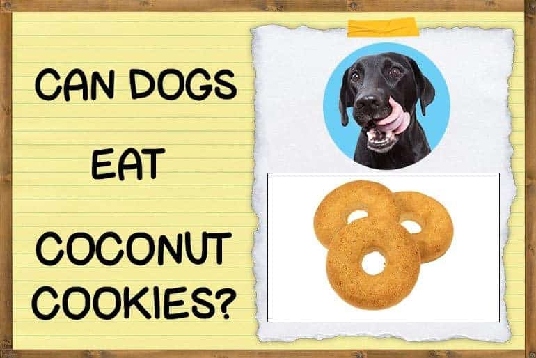Can dogs eat coconut cookies