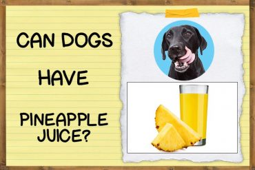Can Dogs Have Pineapple Juice?