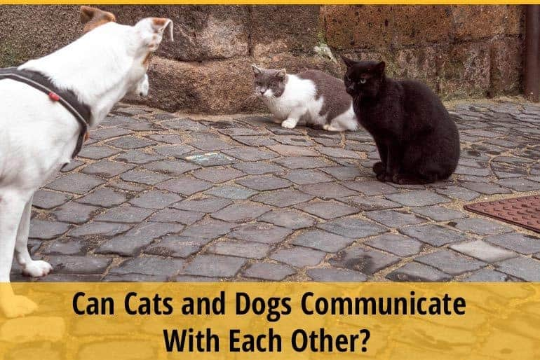 Can Cats and Dogs Communicate With Each Other