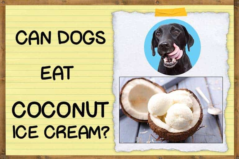Can Dogs Eat Coconut Ice Cream