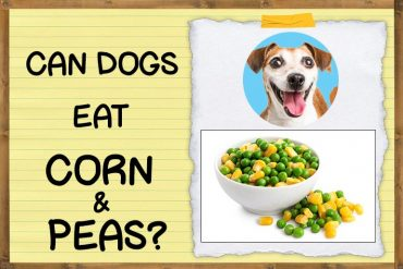 Can Dogs Eat Corn and Peas