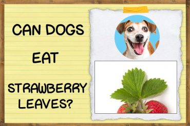 Can Dogs Eat Strawberry Leaves?
