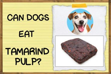 Can Dogs Eat Tamarind Pulp