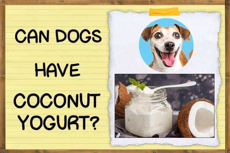Can Dogs Have Coconut Yogurt