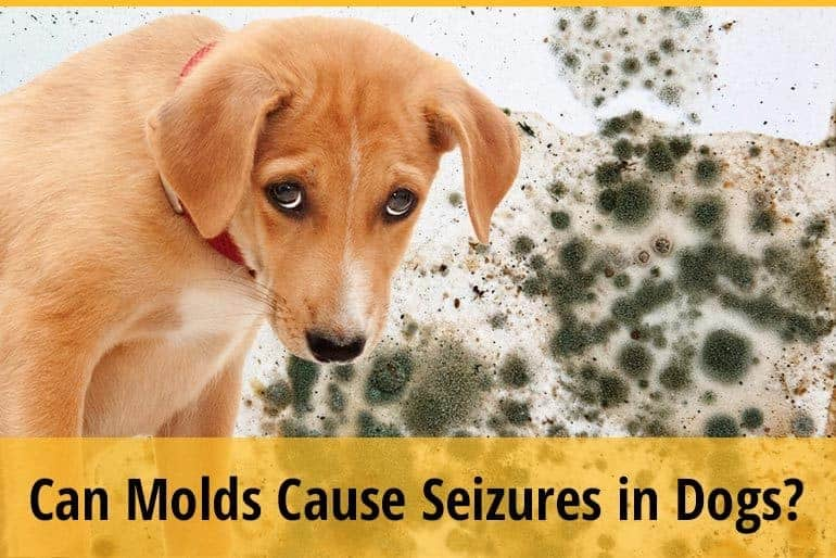 Can Molds Cause Seizures in Dogs?