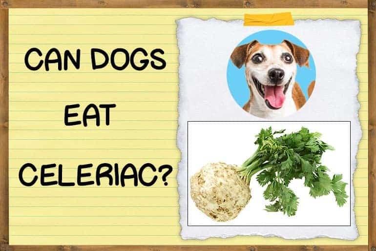 Can Dogs Eat Celeriac
