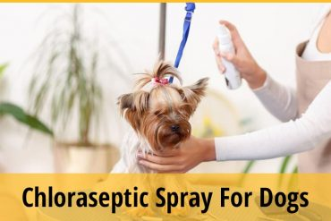 Can I Use Chloraseptic Spray on My Dog?