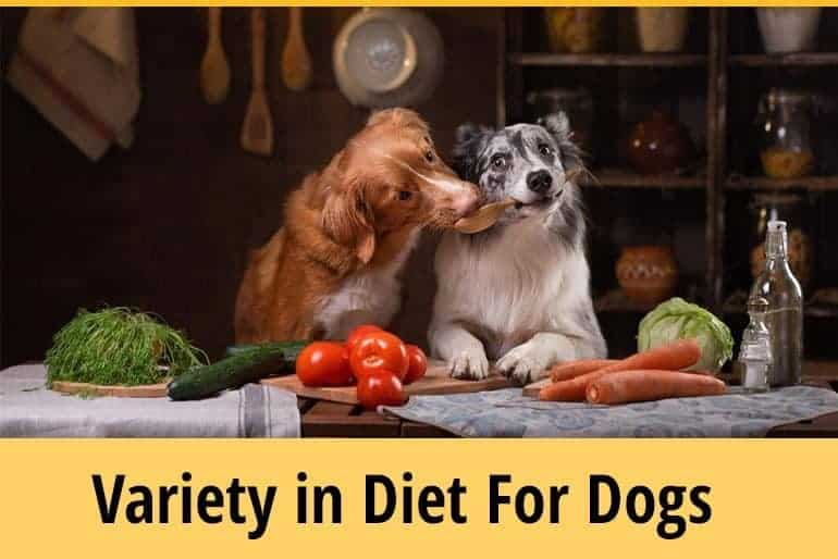Do Dogs Need Variety in Their Diet?