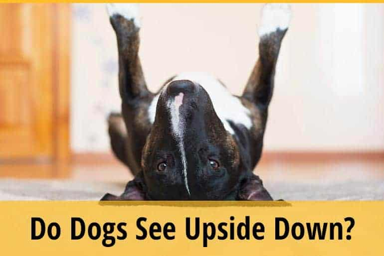 Do Dogs See Upside Down