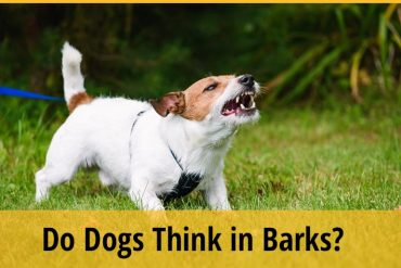 Do Dogs Think in Barks