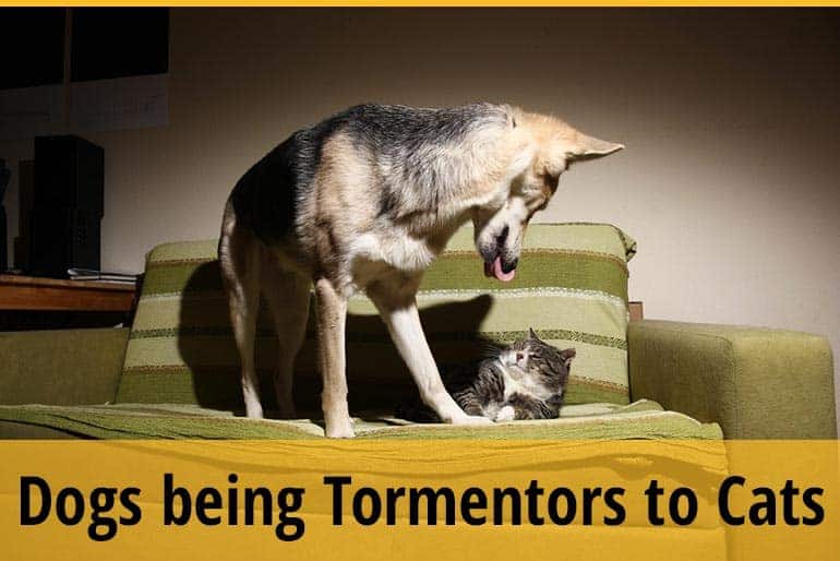 How Can Dogs be Tormentors to Cats