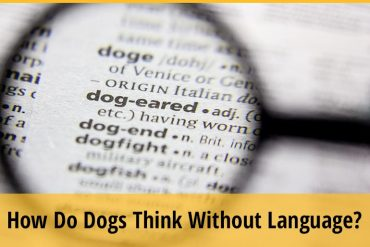 How Do Dogs Think Without Language