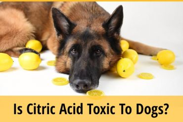 Is Citric Acid Toxic To Dogs