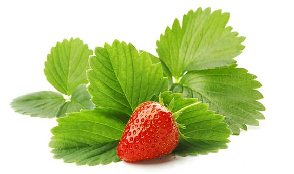 strawberry leaves for dogs