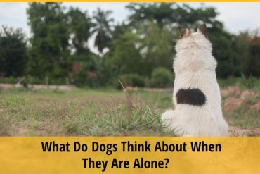 What Do Dogs Think About When They Are Alone