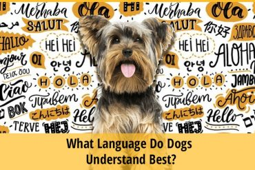 What Language Do Dogs Understand Best