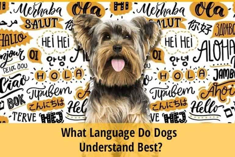 What Language Do Dogs Understand Best
