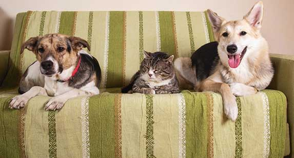 two dogs and a senior cat