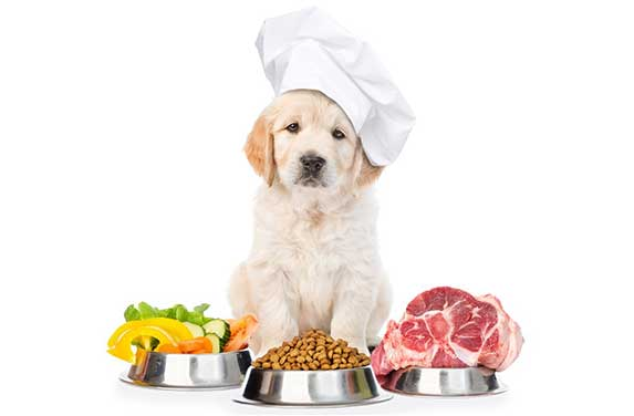 Puppy with variety of foods