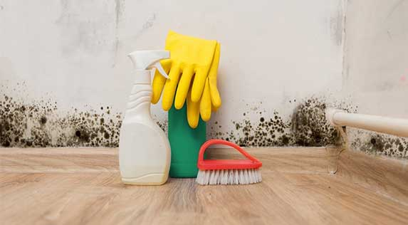Mold cleaning kit