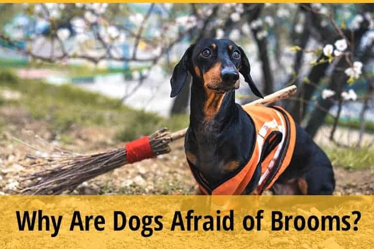 Why Are Dogs Afraid of Brooms