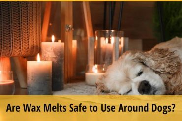 Are Wax Melts Safe to Use Around Dogs