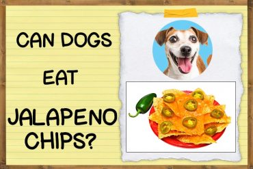 Can Dogs Eat Jalapeno Chips