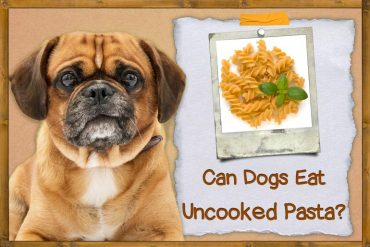 Can Dogs Eat Uncooked Pasta
