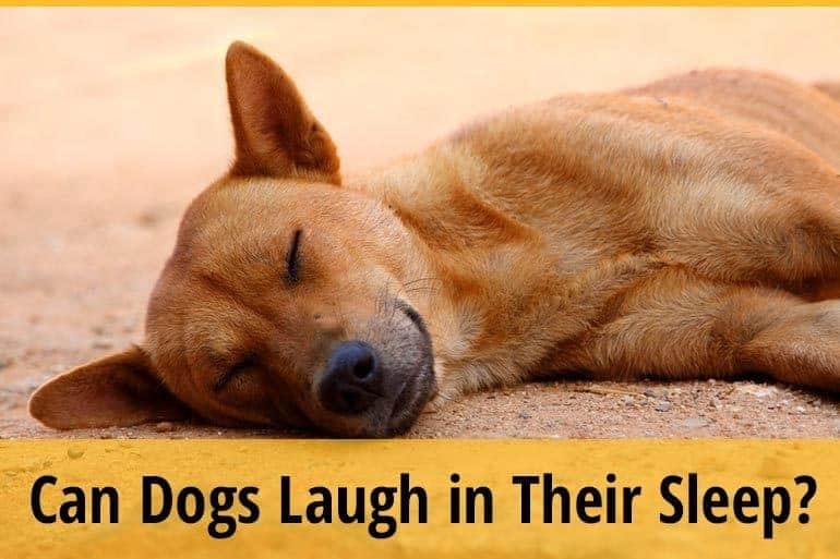 Can Dogs Laugh in Their Sleep