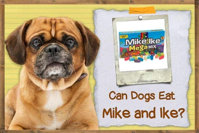 Can dogs eat Mike and Ikes