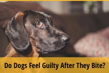Do Dogs Feel Guilty After They Bite