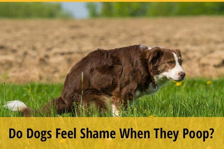 Do Dogs Feel Shame When They Poop