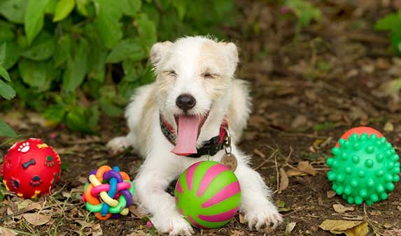 Happy dog surrounded with toys