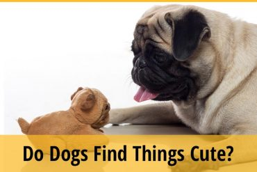 Do Dogs Find Things Cute
